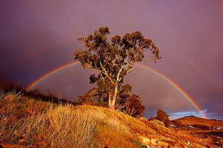 Rainbow by mick walters