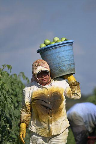 Agricultural slave